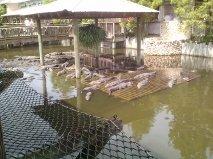 plenty of gators