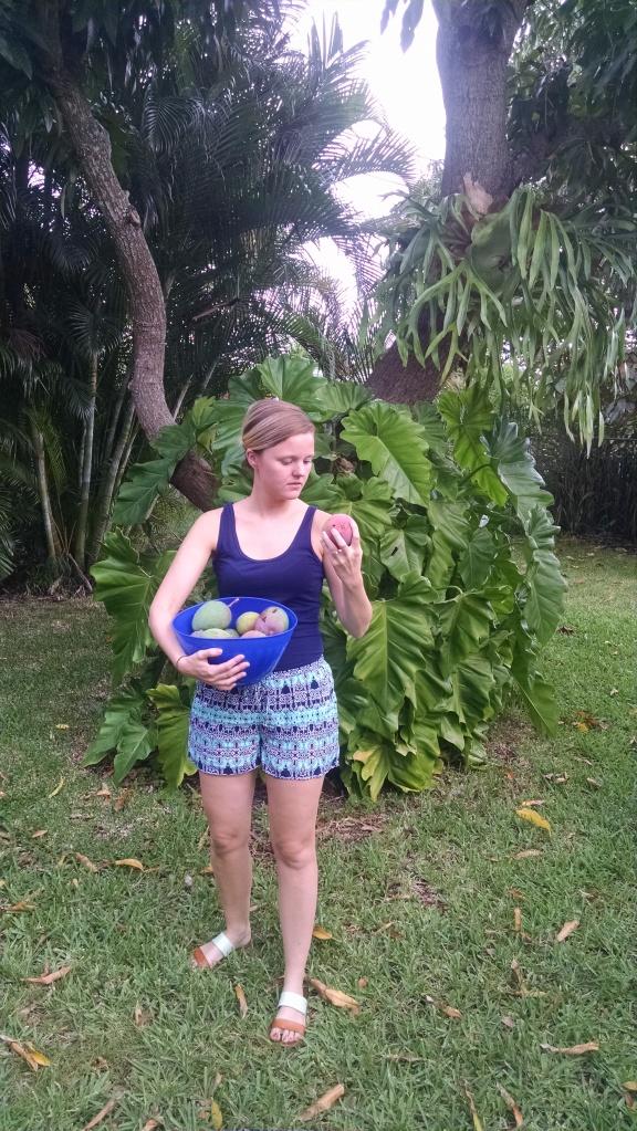 so many mangoes!